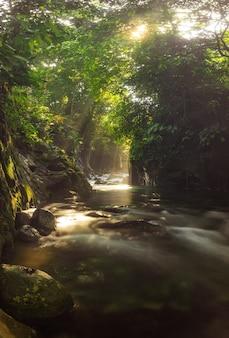 Uitzicht op rivierwater in de ochtend met zonlicht met groene bladeren in indonesisch tropisch bos