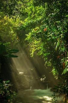 Uitzicht op rivierwater in de ochtend met zonneschijn met groene bladeren in indonesisch tropisch bos