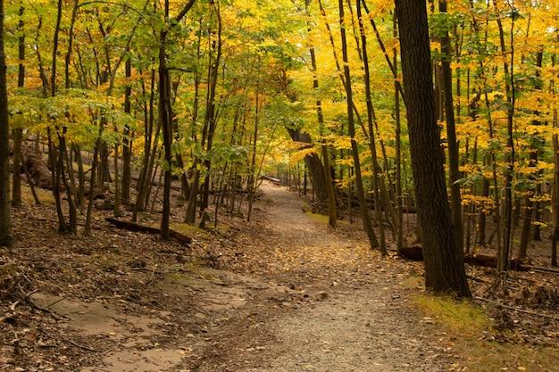 Uitzicht op voetpad samen met herfstbomen in het bos
