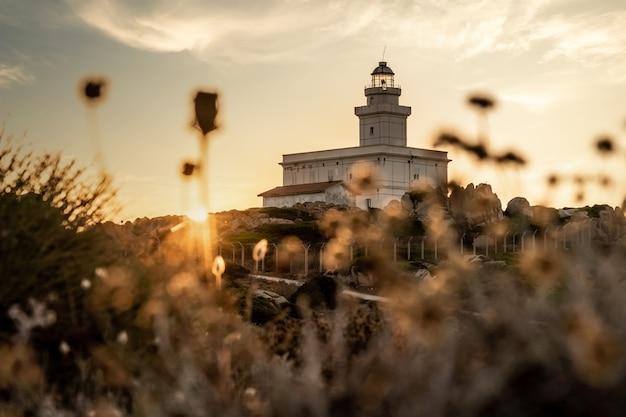 Uitzicht op vuurtoren en bloemen in capo testa bij zonsondergang - sardinië.