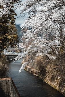 Uitzicht op witte bloemen door een rivier