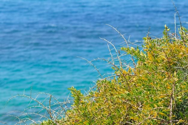 Uitzicht op zee door een doornige struik