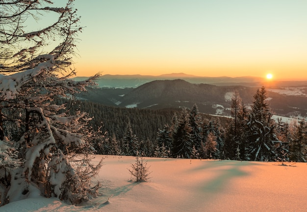 Uitzicht van bovenaf betoverend schilderachtig landschap van bergketens bedekt met dichte en besneeuwde sparrenbossen tegen de ondergaande zon op een heldere winteravond.