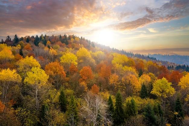 Uitzicht van bovenaf op dicht dennenbos met luifels van groene sparren en kleurrijke gele weelderige luifels in herfstbergen bij zonsondergang.