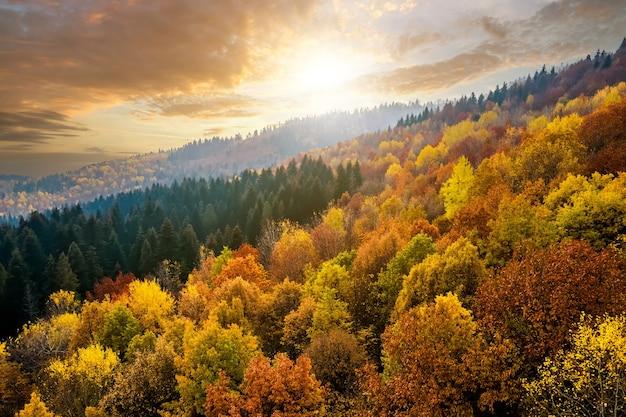 Uitzicht van bovenaf op dicht dennenbos met luifels van groene sparren