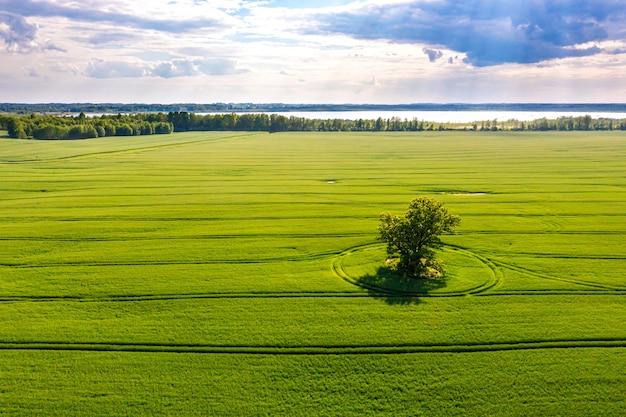 Uitzicht van bovenaf op eenzame boom met schaduwen in een groen veld en bos op de achtergrond