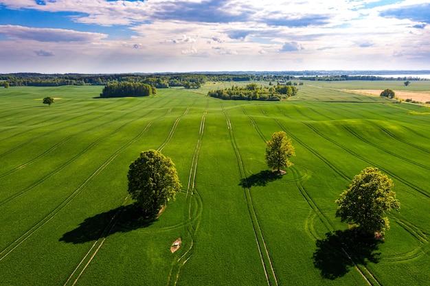 Uitzicht van bovenaf op verschillende bomen met schaduwen in een groen veld en bos op de achtergrond