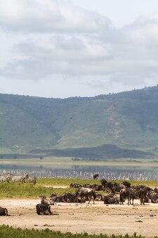 Uitzicht vanaf de bodem van de ngorogoro-krater. tanzania, afrika