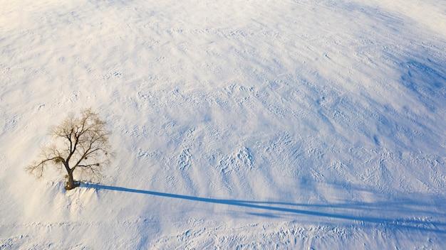 Uitzicht vanaf de drone op een enkele boom in een besneeuwd veld. minimalisme.