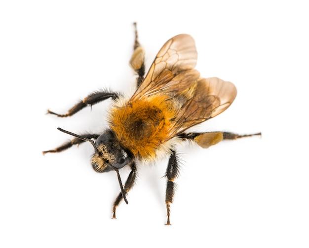 Uitzicht vanaf de hoogte van een europese honingbij