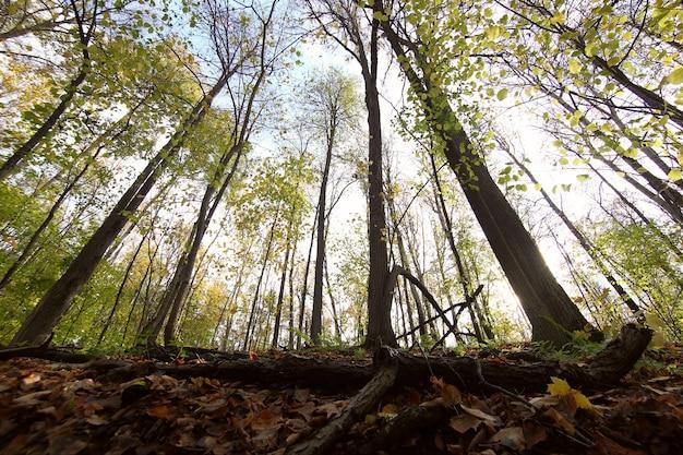 Uitzicht vanaf de onderkant van de boomkronen in het lentebos