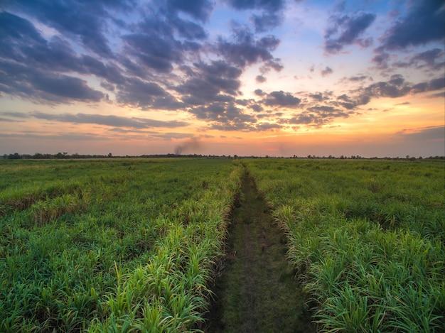 Uitzicht vanaf drone suikerriet veld met zonsondergang hemel natuur landschap achtergrond.