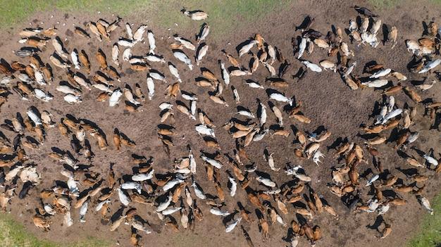 Uitzicht vanaf drone vlucht over weiland in platteland thailand