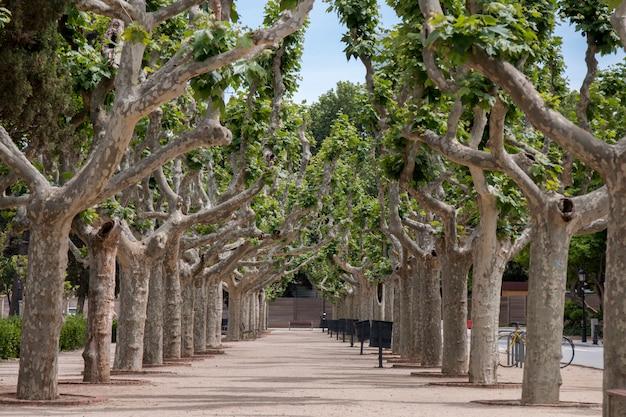 Uitzicht vanaf het prachtige citadelpark (parc de la ciutadella) in barcelona, spanje.