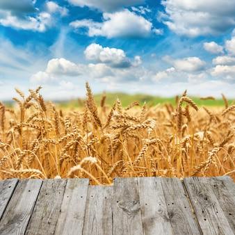 Uitzicht vanaf houten brug naar gouden tarwe veld vers gewas en blauwe hemel met wolken