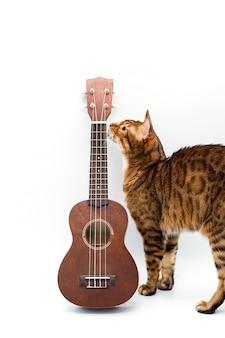 Ukelele akoestische gitaar en schattige bengaalse kat pauzetijd voor hobby