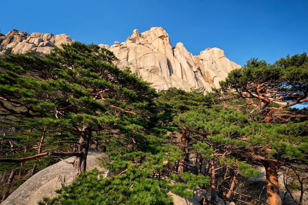 Ulsanbawirots in seoraksan national park, zuid-korea