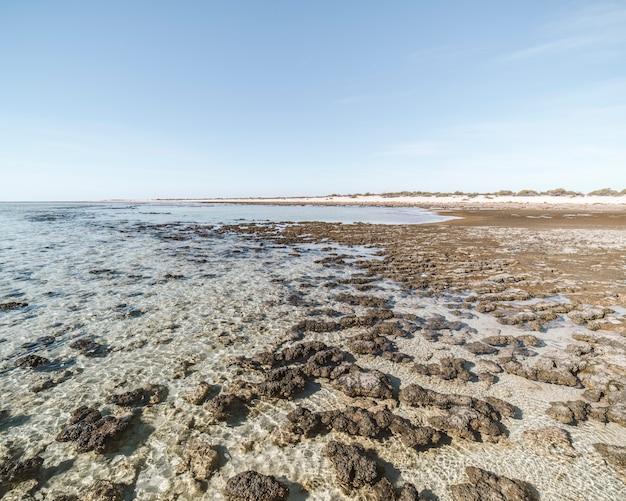 Unieke oude rotsen genaamd stromatolieten in een paradijselijk strand. een van de oudste bewijzen van leven op aarde