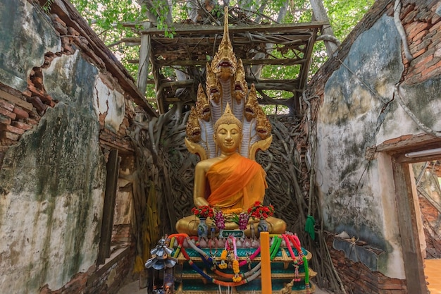 Unseen thailand, ruïnes van de oude tempel met een bodhi-boomwortel, wat sang kra tai, angthong, t
