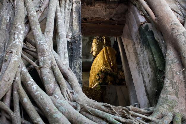 Unseen thailand wat bang kung, boeddhistische tempel met de grote boom in amphawa