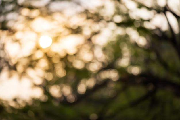 Vaag bokehblad op grote boom tegen oranje zonsopgangachtergrond.