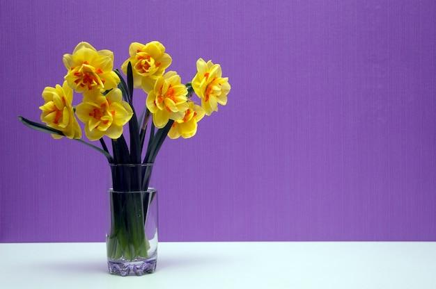 Vaas met narcissen in het licht. lente bloemen. op paarse achtergrond