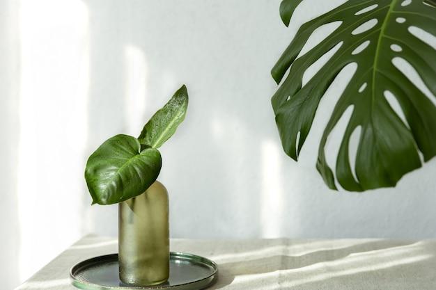Vaas met natuurlijke bladeren en monsterablad in het interieur van de kamer.