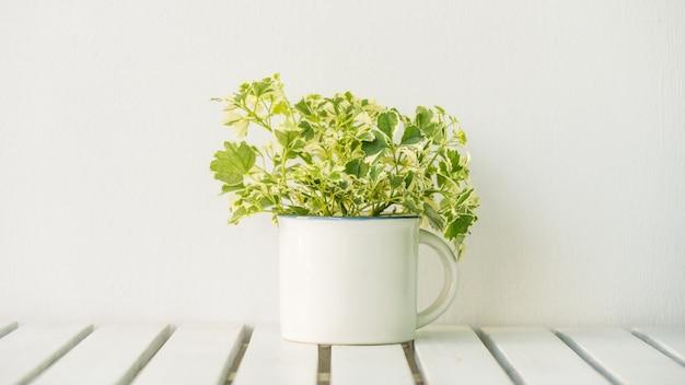 Vaasplant