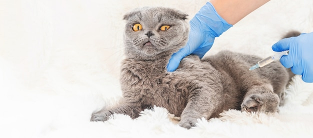 Vaccinatie van katten. diergeneeskunde
