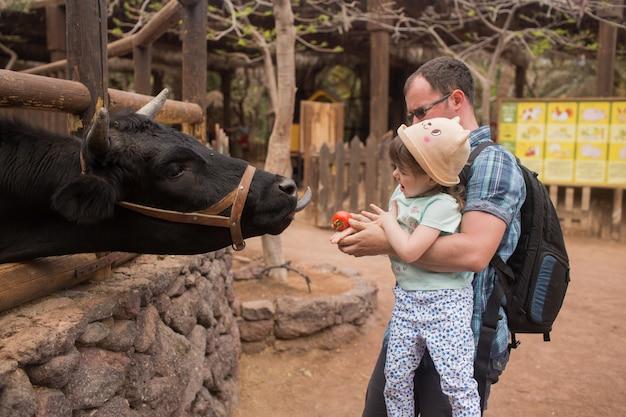 Vader en dochter voeren de stier in de dierentuin