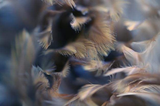 Vage vogel en kippenveer textuur voor achtergrond