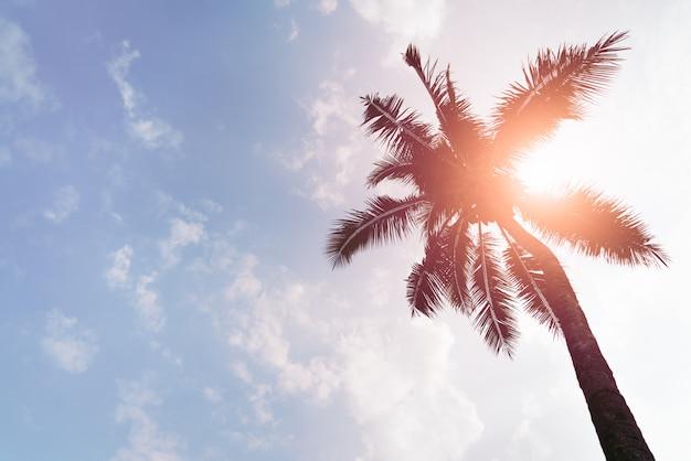 Vakantie die met kokospalmen over duidelijke hemel op dagmiddellicht laadt