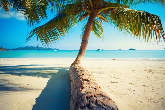 Vakantie zomervakantie achtergrond behang zonnig tropisch caribisch paradijs wit zandstrand