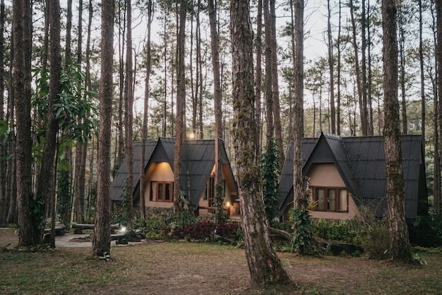 Vakantiehuis in dennenbos