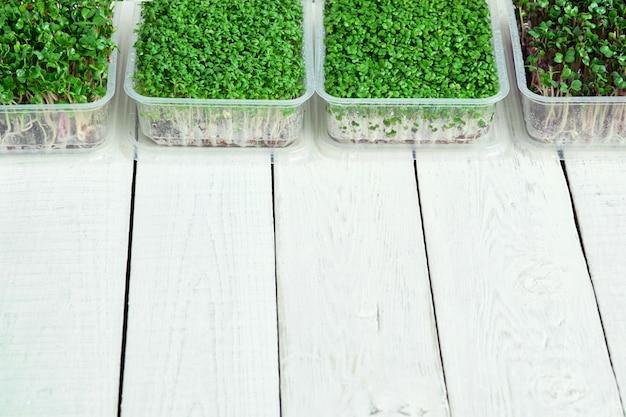 Vakken met microgreens van waterkers, radijs en broccoli op witte tafel