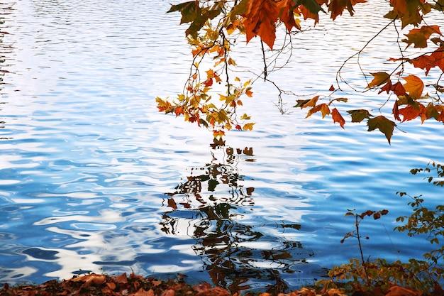 Val achtergrond. helder gekleurde bladeren op de takken die in het water van meer weerspiegelen.