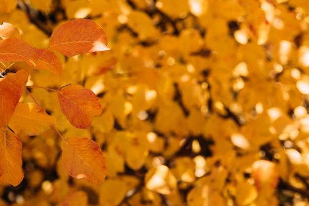 Val de natuur. de close-up van gele en rode bladeren over defocused gouden bomen.