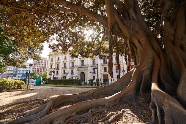 Valencia glorieta park grote ficus boom spanje