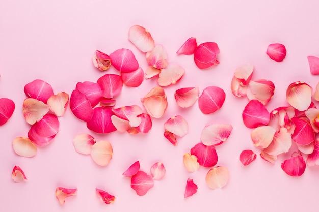 Valentijnsdag. rose bloemen bloemblaadjes op wit.