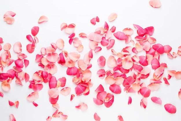 Valentijnsdag. roze bloemen bloemblaadjes op witte achtergrond. valentijnsdag achtergrond. plat lag, bovenaanzicht, kopie ruimte.