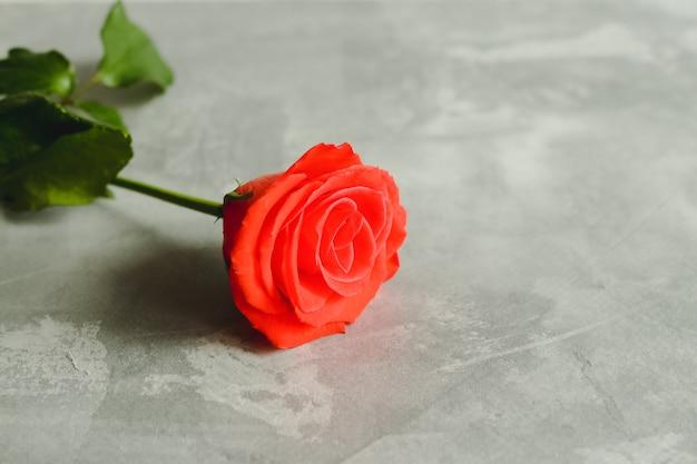 Valentijnsdag wenskaart met rode roos op grijze achtergrond met kopie ruimte.
