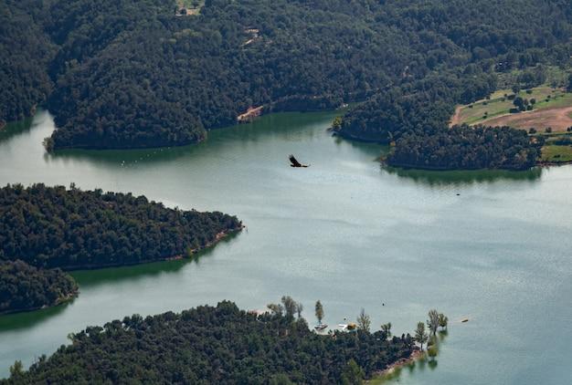 Valk die over het water en het bos vliegt