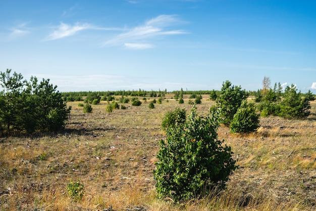 Vallei bedekt met gras en struiken onder zonlicht