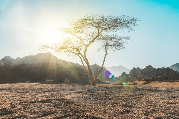 Vallei in de woestijn met een acaciaboom met bergrots en wolken op de achtergrond. prachtig woestijnlandschap met een eenzame boom en rotsachtige achtergrond.
