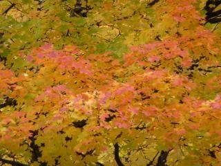 Vallen kleuren de herfst