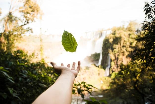 Vallende bladeren met onscherpe achtergrond