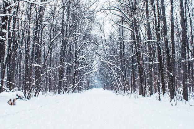 Vallende sneeuw in een winter park met besneeuwde bomen, slow motion