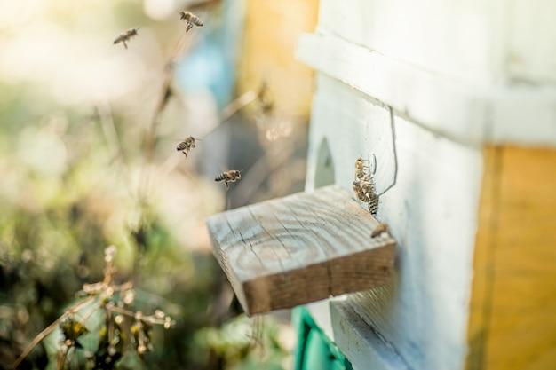 Van bijenkorf sluipen bijen uit. honingbijenkoloniewachten op blauwe bijenkorf van plunderende honingdauw.