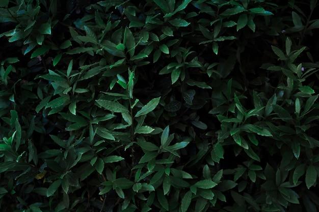 Van boven donkere planten