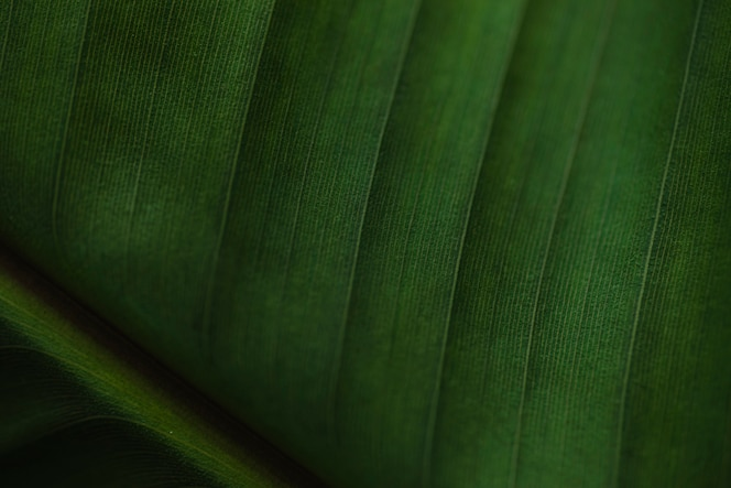 Van boven palmbladeren patroon